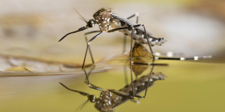 Tips om malaria te voorkomen