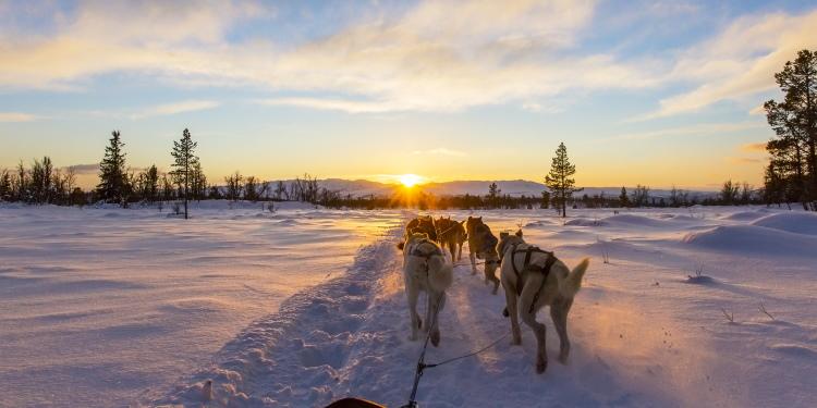 Bijzondere wintersporten: hondenslee